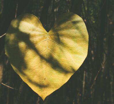 feuille d'abre jaune en forme de coeur avec des ombres bien-être